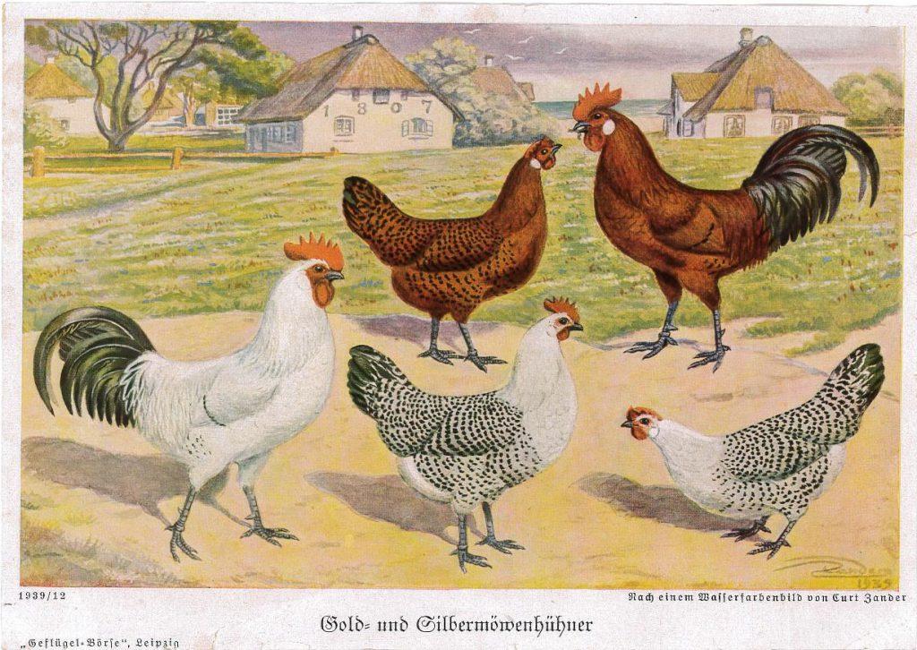 Ostfriesische Möwen